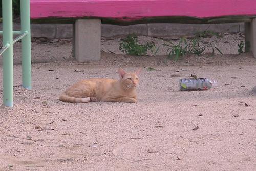 この猫はいつか見た猫