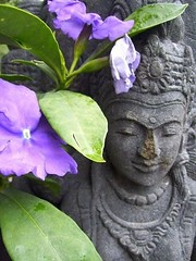 Vishnu for yu (endemanf) Tags: garden vishnu tropical statuary balinese brunfelsia calmpeace discoveryphotos onewordwow hiddentreasuregroup