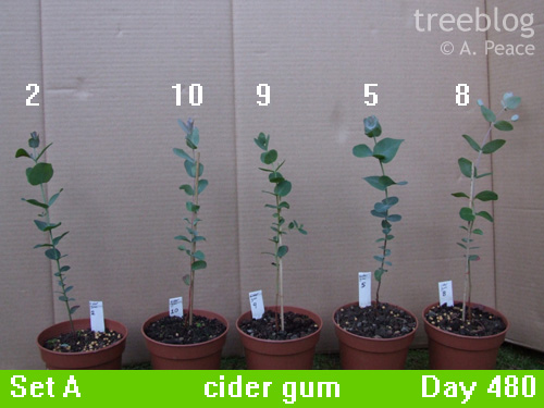 cider gums Nos. 2, 5, 8, 9 and 10