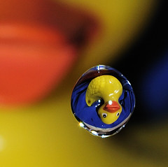 Rubber Duckie You're the One... (karenturner) Tags: blue summer orange macro home wa