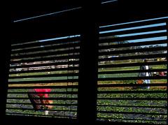 blinds2 (maraculio) Tags: art field photo strawberry blinds pk challenge pp maraculio