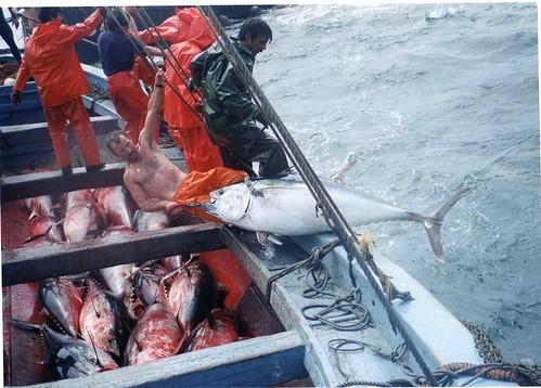 Oceana exige el cierre de la pesca industrial del atún rojo