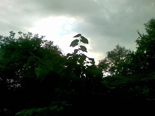 Sky Rising above the Garden