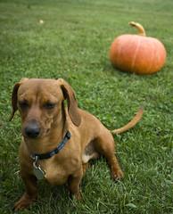 Reno Turns His Back on Halloween