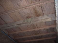 土間の天井にツバメの巣
