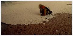 eu queria ser livre [...] (Matteus Oberst) Tags: butterfly cores fly sony borboleta voar colourartaward