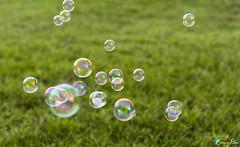 .`.HaPpy Eid (CornrSton) Tags: grass happy soap nikon eid bubbles d3 cornerstone soapbubbles soapbubble buble digitalcameraclub bubels aplusphoto colourartaward nikond3