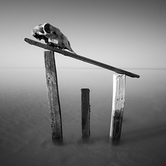 Death Territory (Khaled A.K) Tags: wood sea sky seascape water photography skull wooden sticks surrealism surreal scene khaled waterscape kashkari