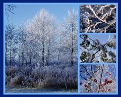 My creation (ditmaliepaard) Tags: fdsflickrtoys frost harderwijk veluwe rijp wolderwijd