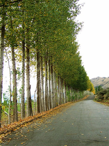 Driveway to Antelope Ridge winery