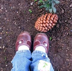 Pine Cone (alan.creeksideretreat@yahoo.com.) Tags: pine cone virtualjourney