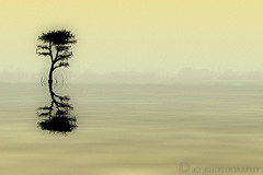 La Quiete (KY-Photography) Tags: sea sky lake ontario canada reflection tree art nature water photoshop landscape design nikon ky guelph dream brush creation illusion gradient imagination layers nikkor khalid allrightsreserved kal polaroidtransfer quietness explored d80 nikond80 18135mmf3556g aplusphoto karmanominated artistsoftheyear kyphotography