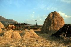Idyllic weekend get away (Hay pillows) (Simply trying) Tags: trek weekend maharashtra hay harishchandragarh