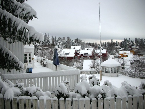 Snow in Norway Winter Wonder Land #1