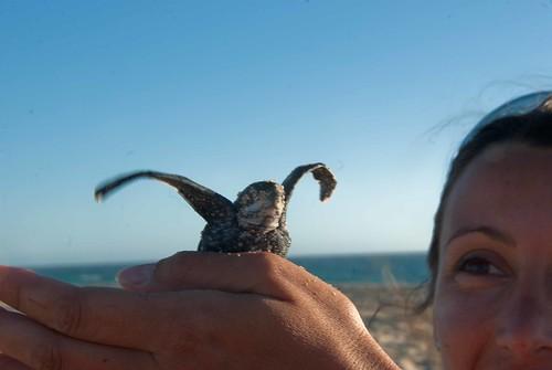 Leatherback Release