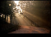calling me in. (sash/ slash) Tags: life road mist way path bangalore january sash journey rays bannerghatta calling welcoming sajesh enligted
