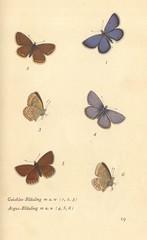 papillons d 14