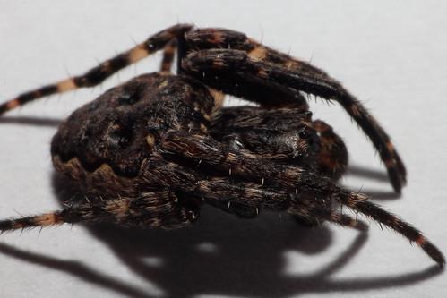 Spider_01