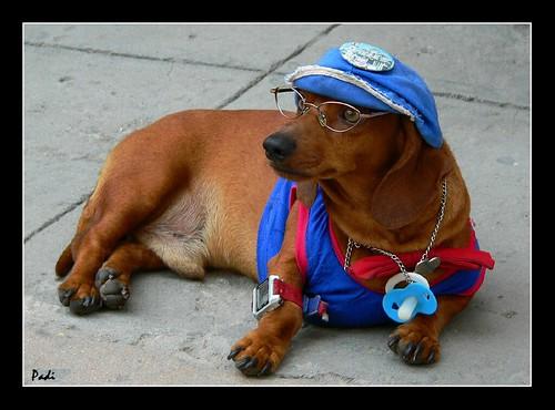 fotos de perros salchichas!!!
