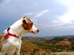 Uma Ponders (hobogloves) Tags: pets uma roadtrip2006