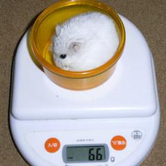 2008/03/16 ましろの体重