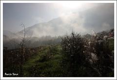 Foschia Mattutina (Danilo Tonin) Tags: fog haze dev neblina rugiada foschia