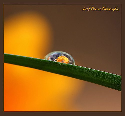 A Drop of Flower