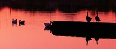 P1040903 (Surender Bodhireddy) Tags: nature silhouette texas westtexas lubbock welltaken onlyyourbestshots ilovemypic onlythebestare mothernatureatherbest perfectsunsetssunrisesandskys bestnaturetnc07