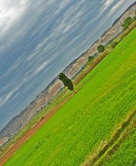 nubes de tormenta (Roberto C..) Tags: espaa verde arbol paisaje zaragoza amarillo nubes tormenta aragon fz8 dmcfz8 berrellen