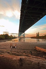 Under the Bridge (all the pix) Tags: new wood city bridge sky cloud sun building water clouds buildings river franklin log sand chair suspension ben body pennsylvania camden horizon under perspective nj pa dirt shore philly delaware filth debri jersy leadingline