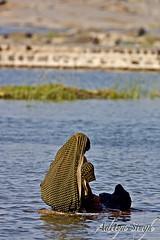 Washing clothes in river Chambal (dickysingh) Tags: people india portraits outdoor aditya singh dicky adityasingh ranthamborebagh theranthambhorebagh wwwranthambhorecom