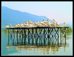 winners (maios) Tags: travel family blue summer sky mountain lake color reflection green water birds greek photo bravo europa europe flickr photographer hellas olympus greece macedonia fotografia winners serres artcafe manikis naturesfinest kerkini maios iosif   heliography   golddragon  mywinners abigfave  pelecans  ysplix theunforgettablepictures  goldstaraward  natureselegantshots       worldglobalaward globalworldawards    iosifmanikis
