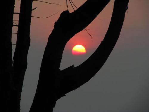 sunsetbackyard
