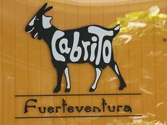 Cabrito -  goat (blackvampire) Tags: vacation holiday beach fuerteventura cabrito costacalma sotaventobeach sotaventobeachclub