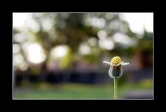 HBW!!! (frborj) Tags: grass wednesday happy weed nikon bokeh philippines pampanga unpopular angelescity d40 inspiredbylove hbw clarkfield bokehlicious aplusphoto teampilipinas frborj
