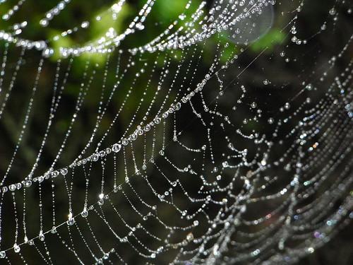 蜘蛛の巣の水滴