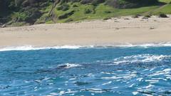 Las docas 074 (macha.cl) Tags: chile valparaiso kayak kayaking ballena macha lagunaverde quintaregion lasdocas surextremo