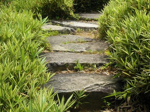 Stairway in a bamboo garden