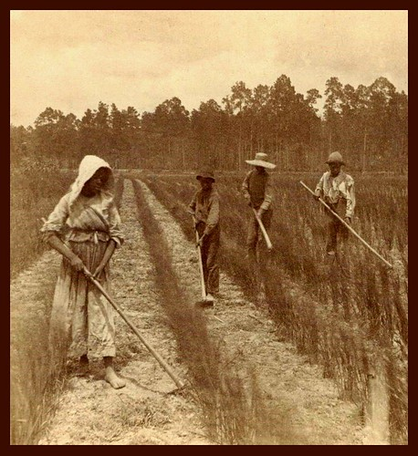 SLAVES, EX-SLAVES, and CHILDREN OF SLAVES IN THE AMERICAN SOUTH, 1860 -1900 (13)