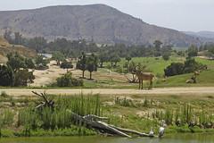 San-Diego_13_WildAnimalPark