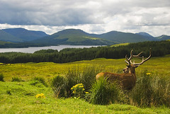 Deer - West Highland Way - Scotland (Marco Boekestijn) Tags: road trip travel holiday west skye tourism netherlands way landscape photography scotland highlands nikon view reis delft tourist deer highland marco westhighlandway rondreis d80 boekestijn schotlang