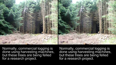 3D tree felling (crossview) (Dan (aka firrs)) Tags: wood uk trees tree forest scotland video stereoscopic 3d crosseye university forestry timber chainsaw logging science stereo research logger stereopair napier lumberjack felling harvesting silviculture crossview