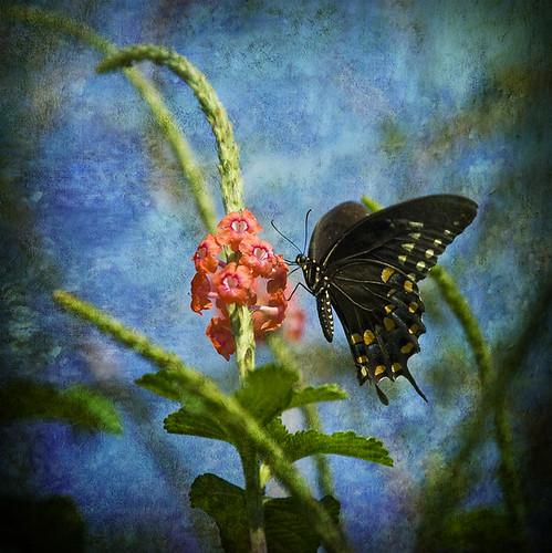 Monet's Butterfly