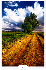 Unpaved (Gert van Duinen) Tags: tree nature landscape countryside nikon scenery digitalart tokina cinematic landschaft tranquil atmospheric landschap naturescape scenicview converginglines dutchartist landschaftsaufnahme cresk summer2008 gertvanduinen subrealistischfotograaf subrealisticphotographer