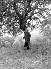 Quercia (FRANCO CERNIGLIA) Tags: bw white lago paolo bn balck montagna bianco nero nonno 1920 nonna lavoro nonni antichi quercia vigna gallura liscia luogosanto saperi ricciu wwwsardiniatouristguideit locusantu gadduresu daddhura