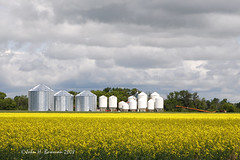 Grain storage & canola fields - Manitoba (John H Bowman) Tags: fab canada july manitoba 2008 canola prairiesky grainstorage greatskies canon24105l canolafields anawesomeshot july2008 cloudslightningstorms