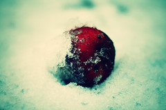 Snow White's apple. (miriness) Tags: winter snow fruit garden outside dof depthoffield snowwhite winterwonderland redapple bloodred flickrlovers miriness
