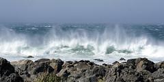 Can you see them? (Nieuwe schoenen; ik ben er weer) Tags: newzealand wild storm natuur zee sealions branding zeeleeuwen 123nature woest aplusphoto windywellington