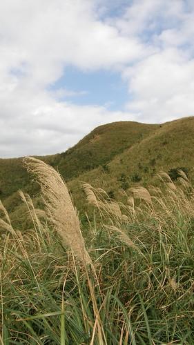 045.芒草與草坡