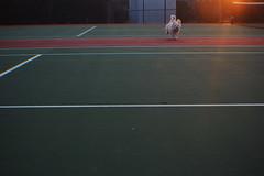 Cooper (Haley L Richter) Tags: winter sunset dog cold happy running cooper fetch tenniscourt havertown gameoffetch